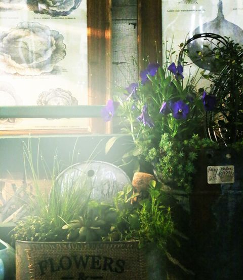 Green, Plant, Flower, Grass, Spring, Sunlight, Tree, Herb, Glass, Floristry,
