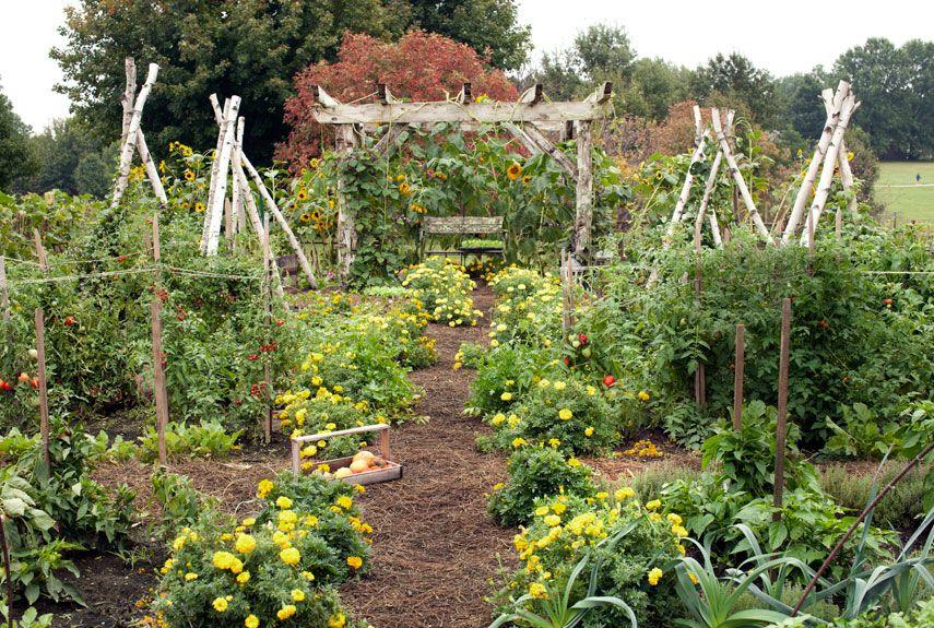 Small Vegetable Garden Design Ideas How To Plan A Garden