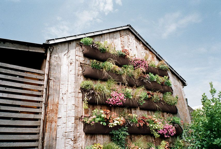 Captivating How To Plant An Outdoor Vertical Garden