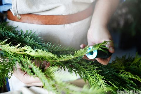 Terrestrial plant, Teal, Pine family, Christmas tree, Feather, Natural material, Conifer, Evergreen, Bird, Fir,