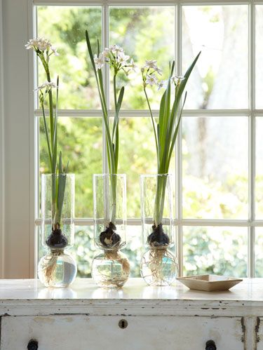 3 Flowers To Force Indoors Winter Gardening And Decorating