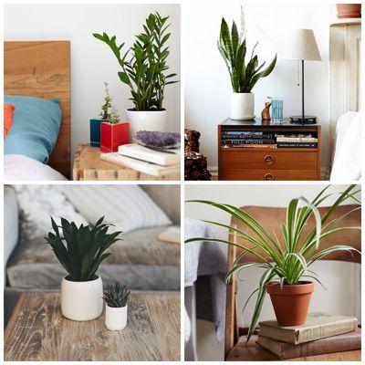 Best Houseplants For Low Light Low Light Houseplants