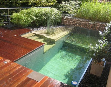 natural swimming pool by clear water revival