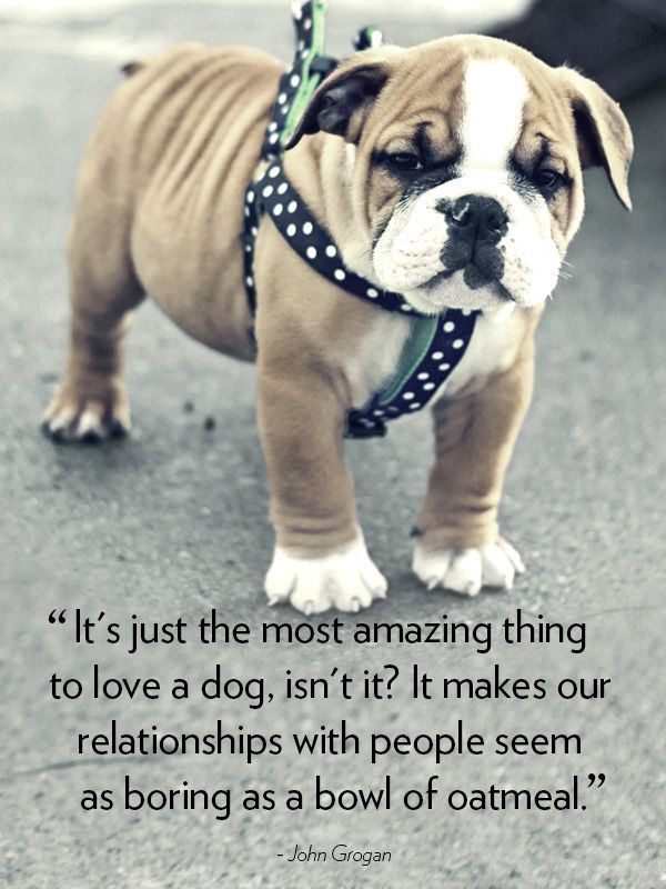 Love My Dog Quotes Interesting 48 Cute Dog Love Quotes Puppy Sayings And Dog Best Friend Quotes
