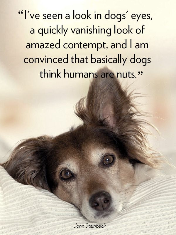 60 Cute Dog Love Quotes Puppy Sayings And Dog Best Friend Quotes Fascinating Quotes About Dogs Love
