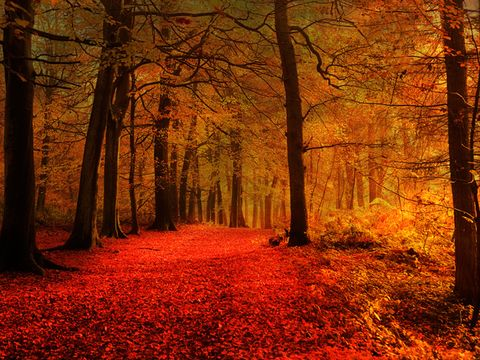 15 Stunningly Surreal Autumn Paths That Will Get You Excited for Fall