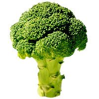 broccoli-cheese-manicotti-2800-200