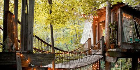 Wood, Plant, Branch, Leaf, Woody plant, Deciduous, Sunlight, Forest, Tree house, Biome,