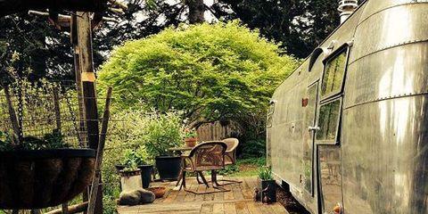 Flowerpot, Garden, Shade, Backyard, Yard, Outdoor furniture, Canidae, Patio, Outdoor table, Courtyard,