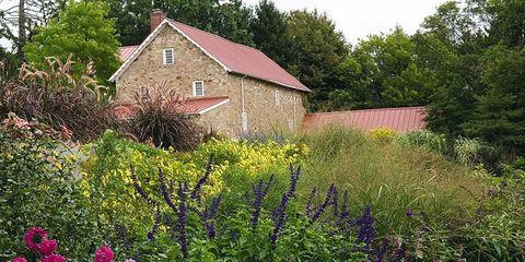 Plant, Shrub, Plant community, Flower, House, Land lot, Garden, Rural area, Flowering plant, Lavender,