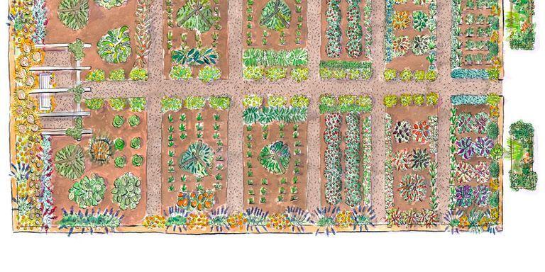 Superb Garden Illustration