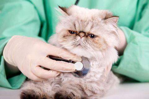 Cat Health Questions - Cat Advice