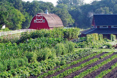 Plant, Farm, Agriculture, Shrub, Rural area, Plantation, Groundcover, Garden, Field, Lavender,