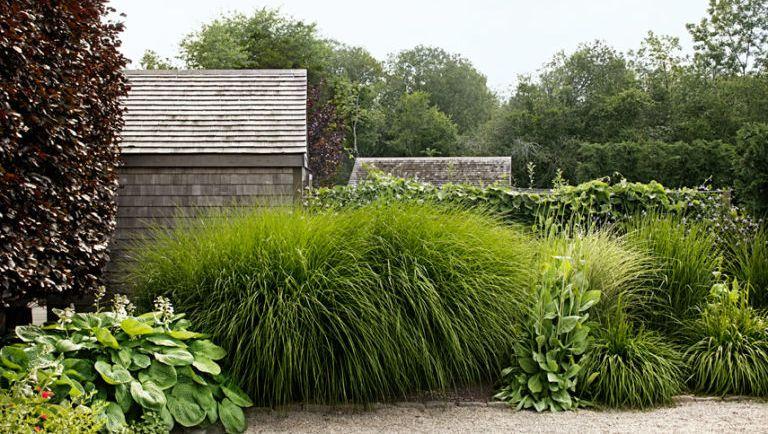 grasses in garden