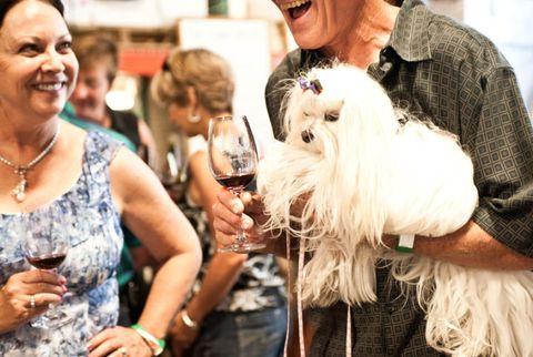 mutt lynch winery
