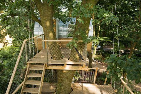 Wood, Tree, Trunk, Stairs, Shade, Handrail,