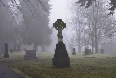 Branch, Atmospheric phenomenon, Atmosphere, Mist, Headstone, Woody plant, Sculpture, Haze, Cemetery, Morning,