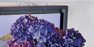 Blue-Hydrangeas-In-Blue-Vase-SS0707