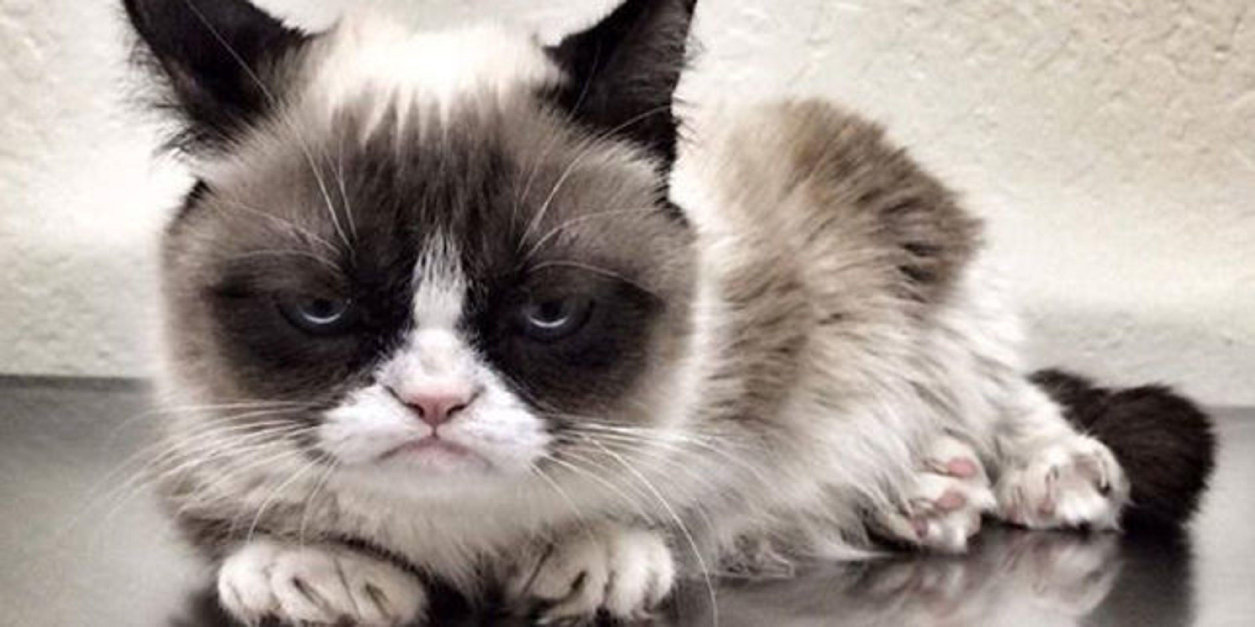 Image of: Tweets Dit Wist Je Nog Niet Over Grumpy Cat