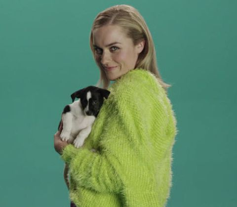 Green, Textile, Dog breed, Carnivore, Dog, Fur, Working animal, Companion dog, Wool, Woolen,