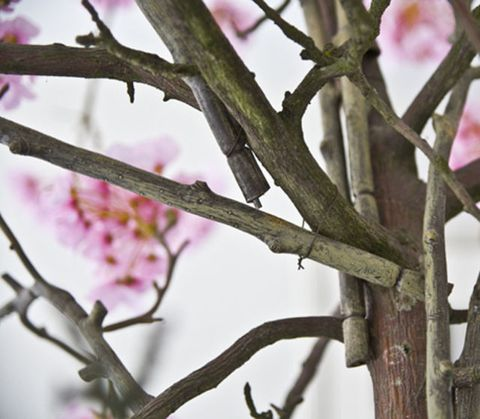 Branch, Twig, Petal, Pink, Flower, Purple, Botany, Magenta, Blossom, Spring,