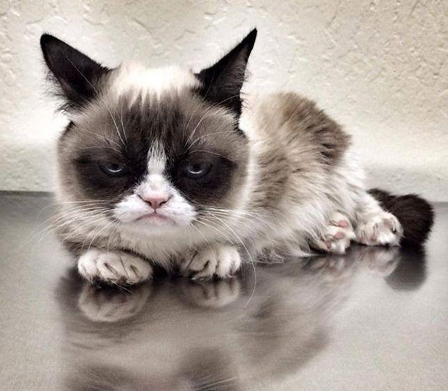 Image of: Realgrumpycat Grumpy Cat Heet Eigenlijk Tardar Sauce Grazia Dit Wist Je Nog Niet Over Grumpy Cat