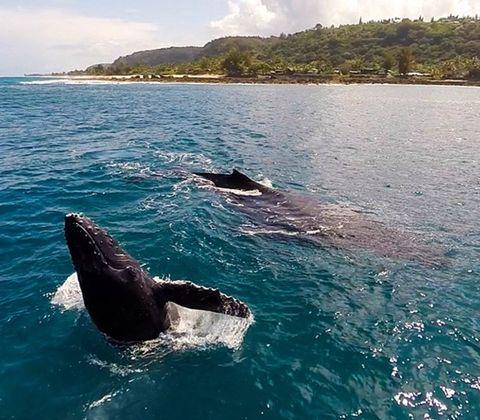 Nature, Organism, Marine mammal, Coastal and oceanic landforms, Water, Water resources, Vertebrate, Liquid, Fluid, Ocean,