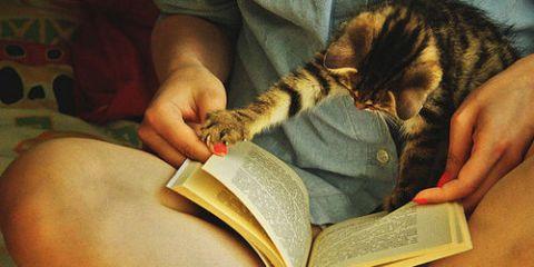 boek lezen kat