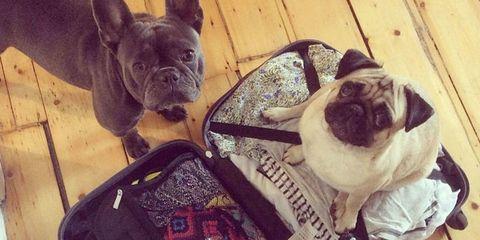 huisdieren koffer