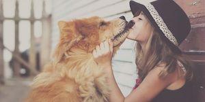 kus-aan-hond-geven