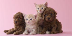 honden-en-kattennamen