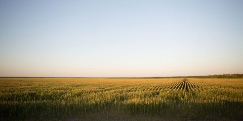 Agriculture, Natural landscape, Farm, Plain, Field, Atmosphere, Horizon, Grassland, Ecoregion, Paddy field,