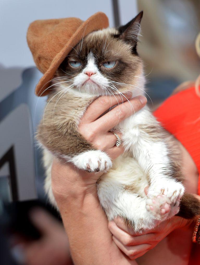 The grumpy cat movie trailer is here getty images altavistaventures Choice Image
