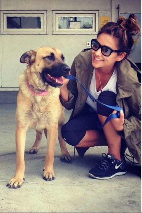 Eyewear, Glasses, Dog breed, Dog, Shoe, Carnivore, Outerwear, T-shirt, Sunglasses, Jacket,