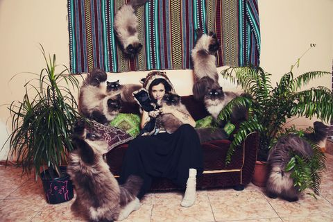 Vertebrate, Organism, Carnivore, Snout, Fur, Dog breed, Flowerpot, Houseplant, Canidae, Small to medium-sized cats,