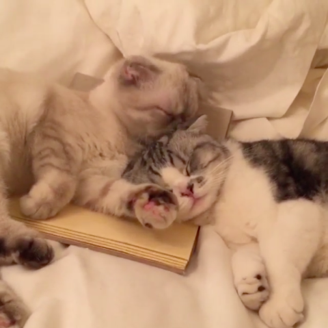 Taylor Swift's Cats Love on Each Other in Cutest Video Ever Made
