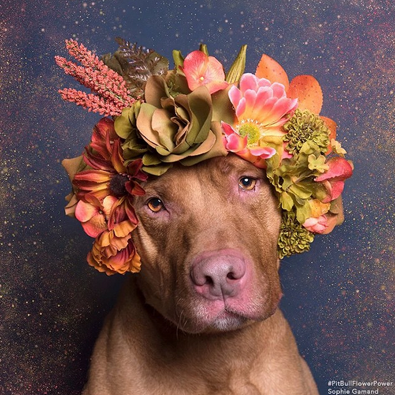 "Casper feeling contemplative in autumnal tones. ""I volunteer at animal shelters a lot, but I always tense around pit bulls because of things I'd heard in the media,"" Gamand told us. ""I wanted to confront my apprehensions.""