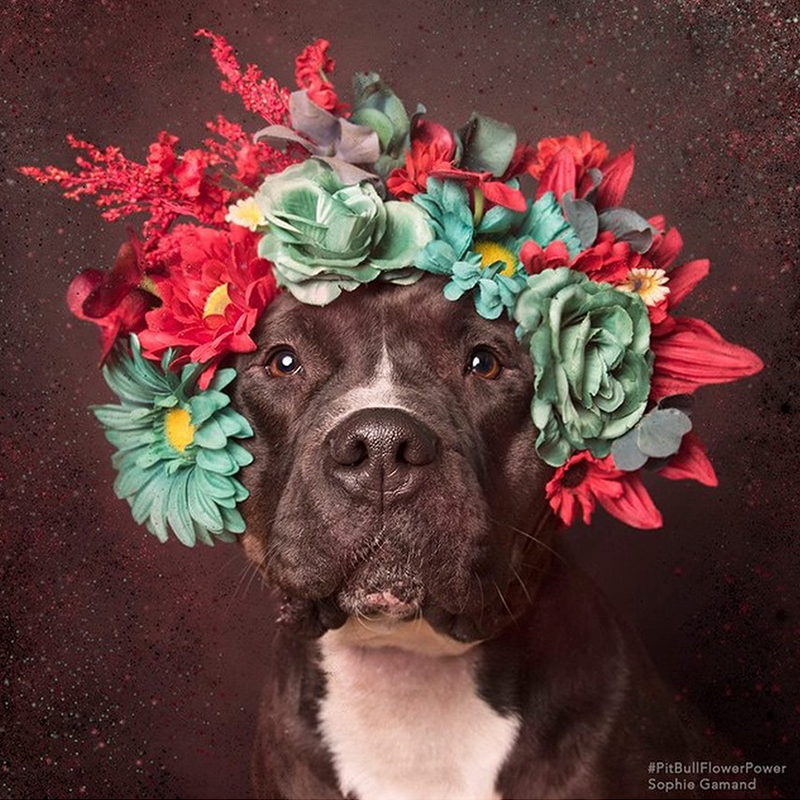 "Miss Molly works mint green and red. ""Shoots can take one minute, or thirty minutes,"" says the photographer. ""It completely depends on the dog."" Gamand makes a unique flower crown for each pup.