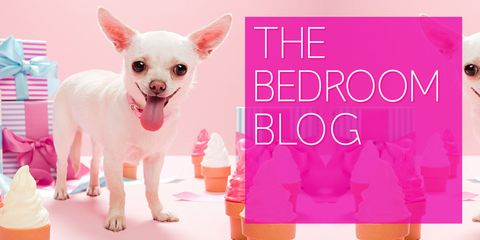 Vertebrate, Pink, Dog, Magenta, Carnivore, Toy dog, Snout, Dog breed, Dog supply, Peach,