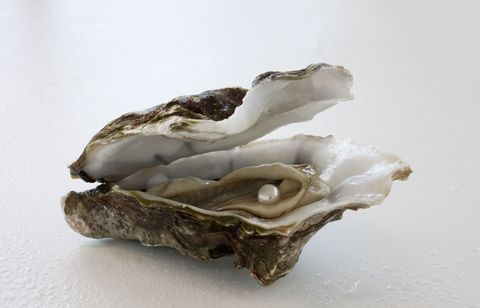 Oyster, Bivalve, Hen-of-the-wood, Shellfish, Beige, Seafood, Mineral, Rock,