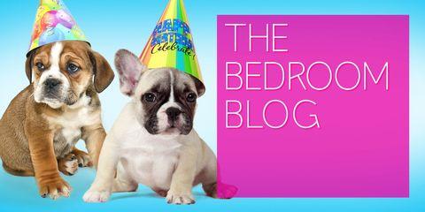 Party hat, Carnivore, Dog, Dog breed, Vertebrate, Pink, Snout, Magenta, Violet, Pet supply,