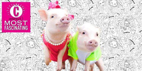 Skin, Vertebrate, Pink, Magenta, Suidae, Snout, Saving, Livestock, Pattern, Domestic pig,
