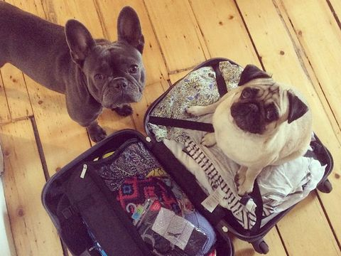 Animal in Suitcases