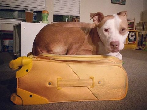 Animals in Suitcases