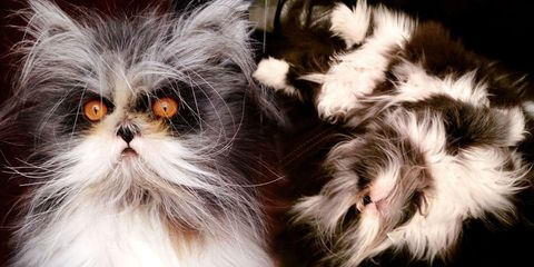 "This Cat With ""Werewolf Syndrome"" Is the Fluffy Feline Overlord You've Been Waiting For"