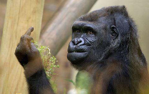 Finger, Organism, Skin, Vertebrate, Primate, Shoulder, Terrestrial animal, Snout, Adaptation, Nature reserve,