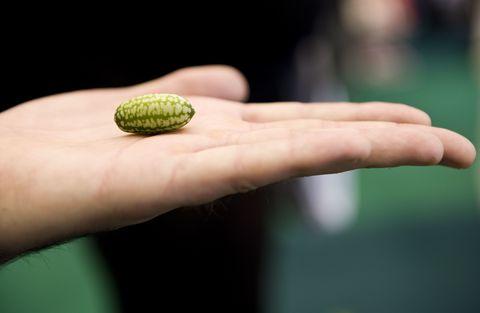Finger, Green, Organism, Botany, Thumb, Nail, Gesture, Produce, Macro photography,