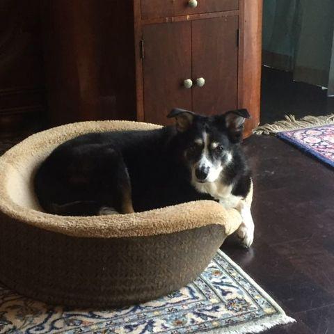 Dog breed, Floor, Dog, Carnivore, Mammal, Flooring, Home accessories, Cabinetry, Door, Pet supply,