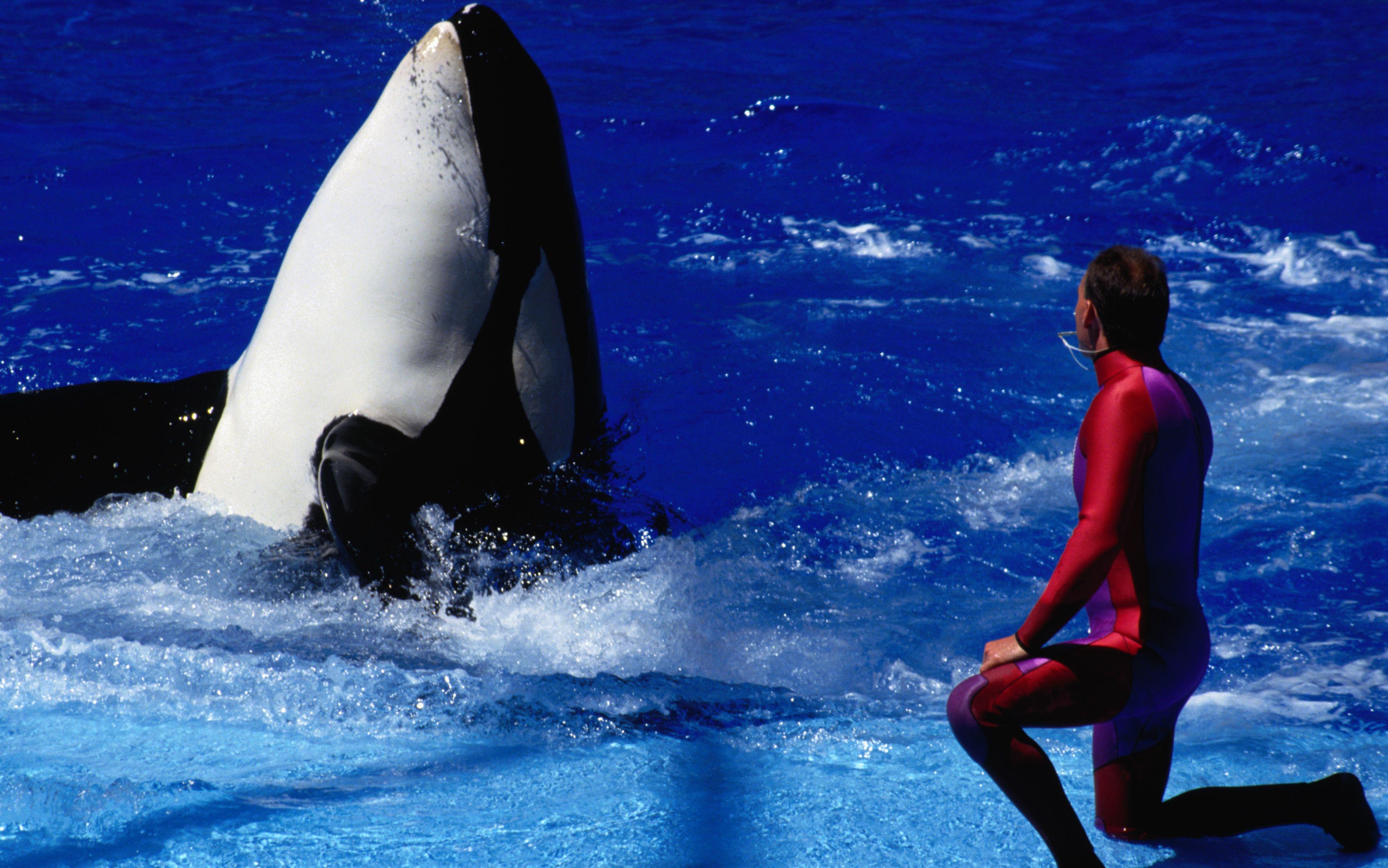third whale this year dies at san diego seaworld seaworld whale