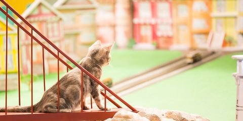 Kitty Halftime Show